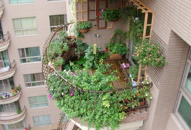 能净化空气的室内植物